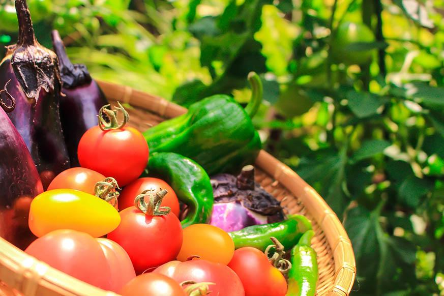 3 - 夏野菜で夏を乗り切る!美容にも健康にも良い旬野菜トマト・ズッキーニ・オクラの簡単レシピ